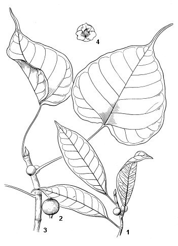 1. Foliage