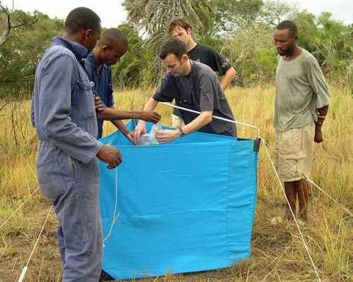 Glossina; collecting tsetse flies from a trap, Pangani.