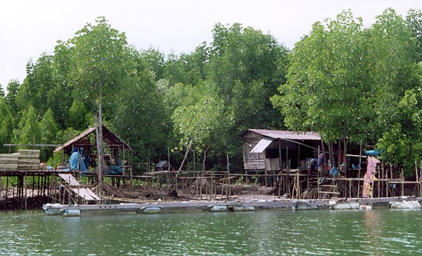 A traditional mangrove-dwelling fishing community, with floating cages for grouper and sea bass rearing, in southern Thailand.
