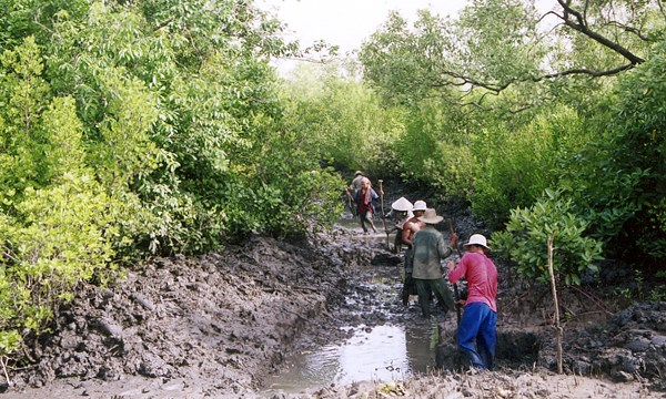 Labourers constructing the dyke and inner canal of an integrated mangrove-aquaculture pond, Cambodia.