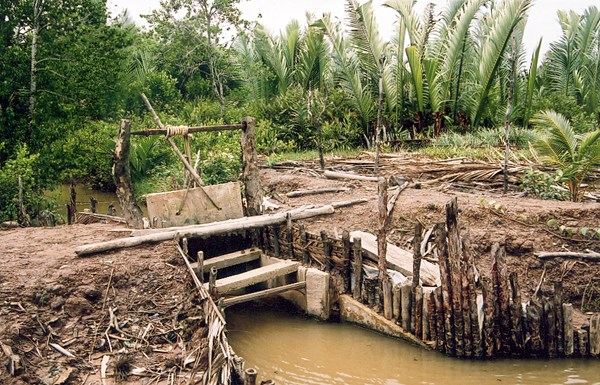 A traditional wooden sluice gate providing water exchange for an integrated mangrove-aquaculture pond in Cambodia.