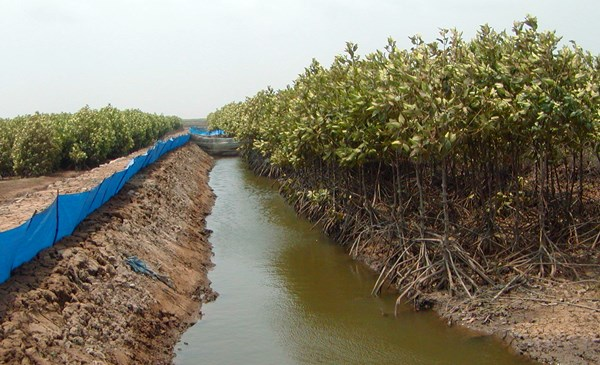 An integrated mangrove-aquaculture pond in the Mekong Delta, Vietnam.