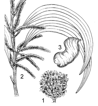 1. habit