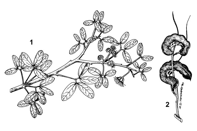 1. flowering branch