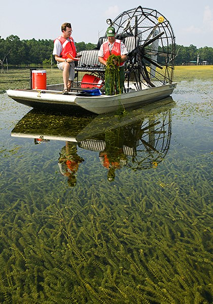 Hydrilla verticillata (hydrilla); invasive habit on a American lake; Mike Netherland (left) and Donald Morgan of the Army Corps of Engineers collect herbicide-resistant hydrilla from Lake Seminole in northern Florida. July 2005.