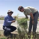Controlling noxious Russian knapweed in the North America