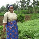 Improving access to quality seeds in East Africa