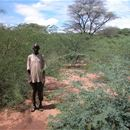 Woody weeds in East Africa