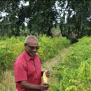Developing Integrated Pest Management for vegetables in Trinidad & Tobago