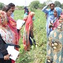 Strengthening vegetable value chains in Pakistan