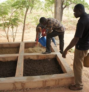 Using insects to improve smallholders' livestock production and food security in West Africa
