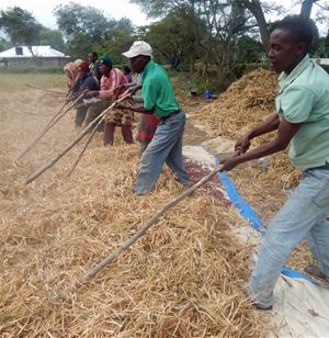 Scaling-up improved legume technologies in Tanzania (SILT)