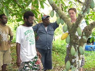 Rehabilitating cocoa for improved livelihoods in the South Pacific