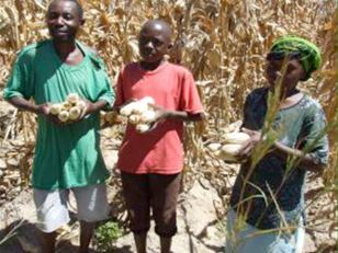 Developing an early warning system for crop pest and disease outbreaks