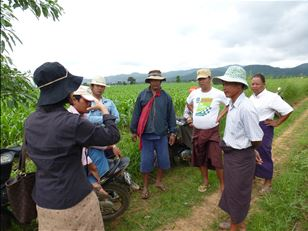 Improving the livelihoods of smallholder maize farmers around the Mekong