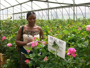Nipping pests in the bud - supporting Ugandan floriculture