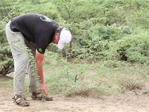 Managing invasive plants in the Horn of Africa