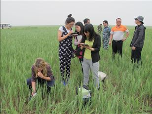 Improving the rational use of pesticides for locusts in China