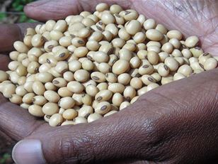 Gender and the Legume Alliance