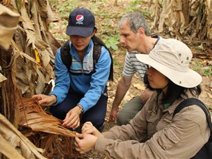 Improving knowledge and understanding of beetle biodiversity in Laos