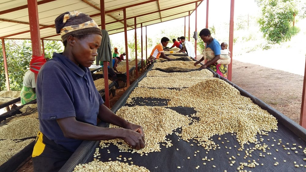 Coffee production in Rwanda
