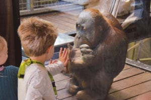 Fig. 15.6E. Positive human contact may be a source of enrichment for some zoo animals. Photograph courtesy of Zoos Victoria, Australia.