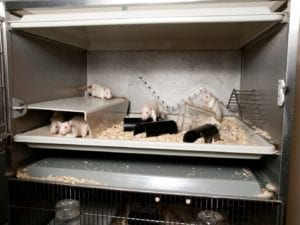 Fig_2.15Ea An example of housing systems designed with the animal's natural behaviour in mind for laboratory rats.