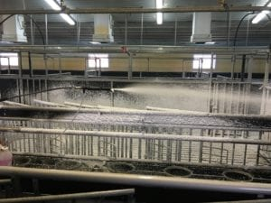 Fig. 8.18E. Thorough cleaning and disinfection of calf pens.