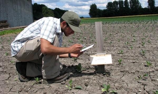 Checking pherenome traps