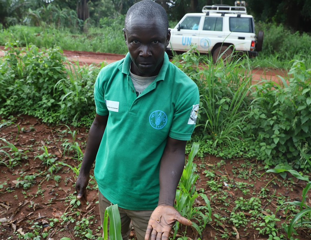 Extension worker in Yambio showing the FAW larvae on maize (002)
