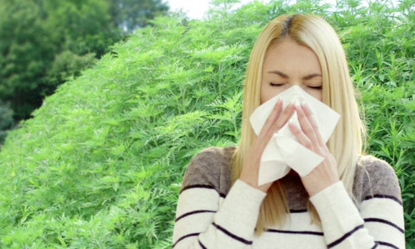 Woman with allergy from ragweed