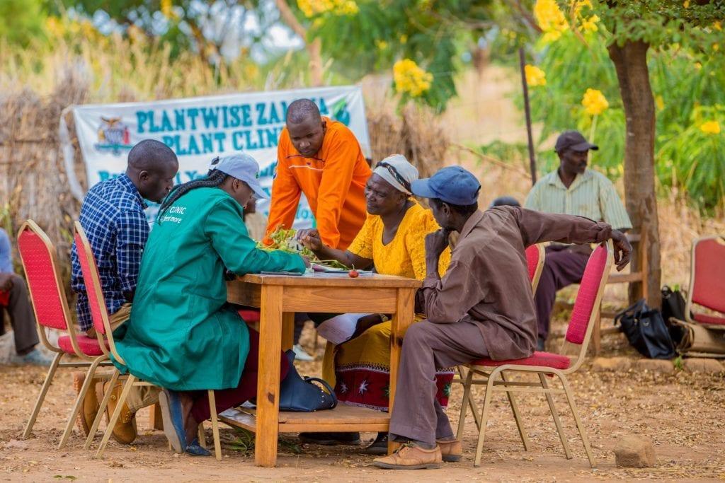 Chinyunyu Plant Clinic in Rufunsa district, Zambia. Plant doctors Obedience Sibale (blue shirt) and Bwalya Mulenga (green lab coat) advise farmers.