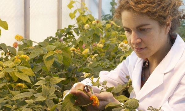 Egham scientist looking at plants under a lantana