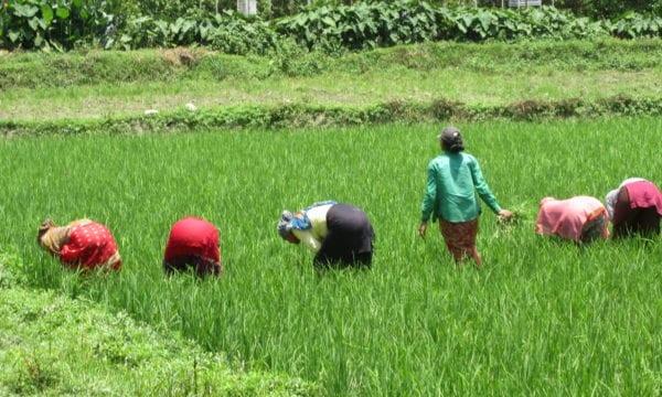 Farmers in Nepal