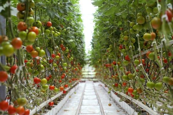 Horticulture Compendium 600x400