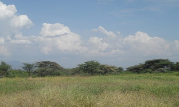A restored grassland in Baringo County (Credit: Ms. Purity Rima Mbaabu)