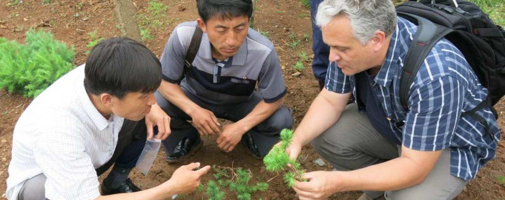 Sampling tree seedlings, Yontan County Nursery, DPRK