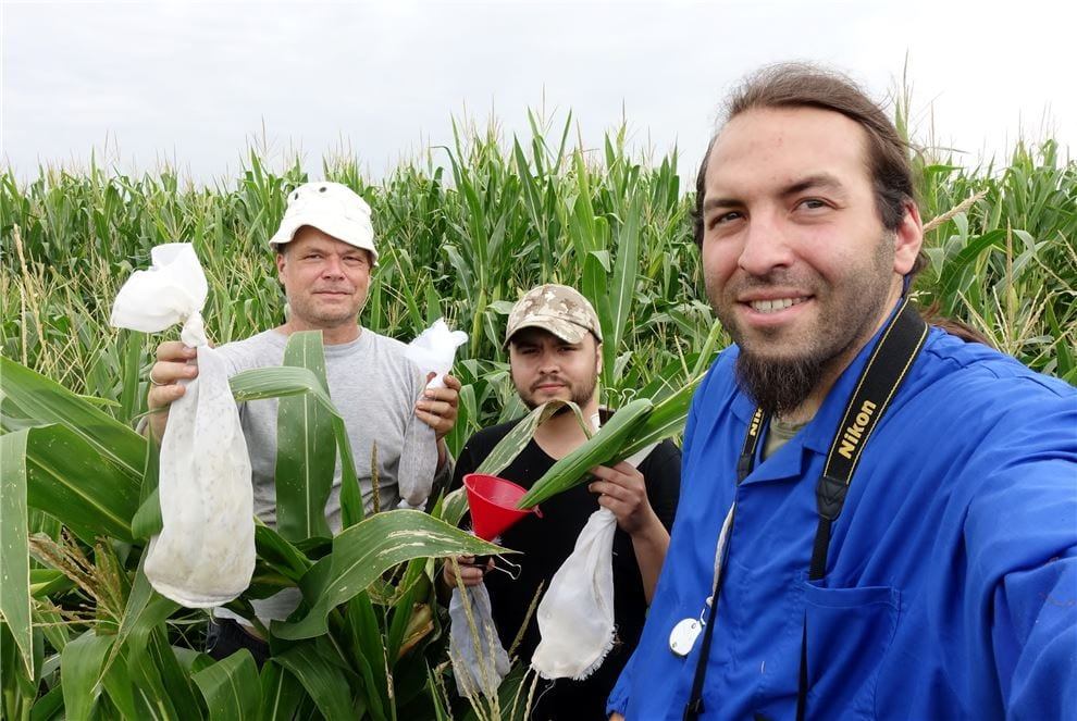 CABI Scientist in maize field with students