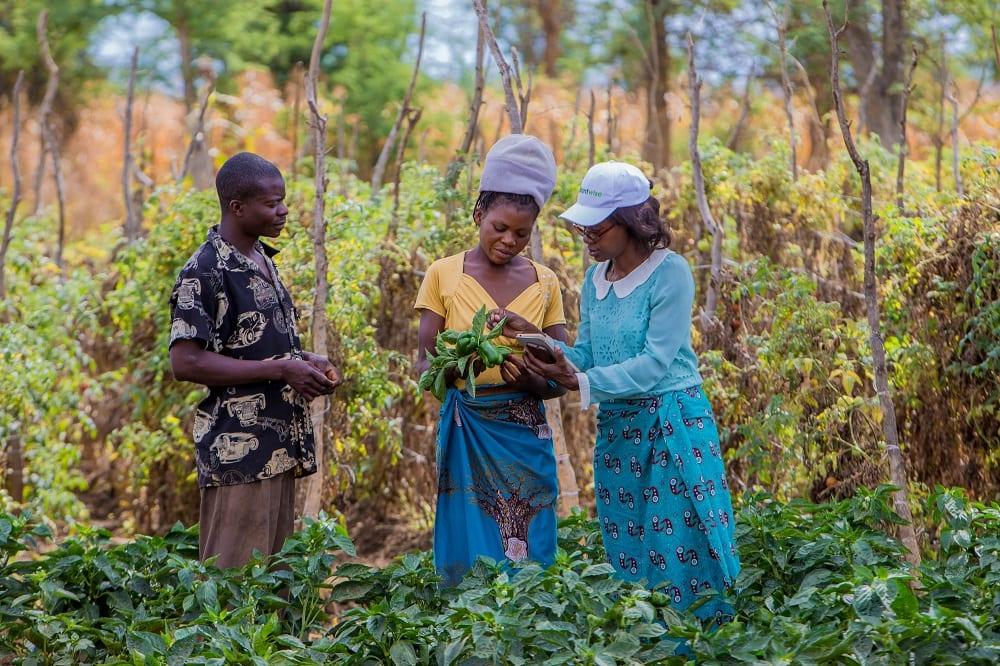 Zambia farmers