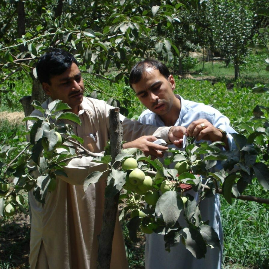 Farmer with plant doctor advising on apple crop