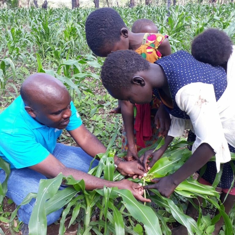 Teaching children how to spot Fall armyworm