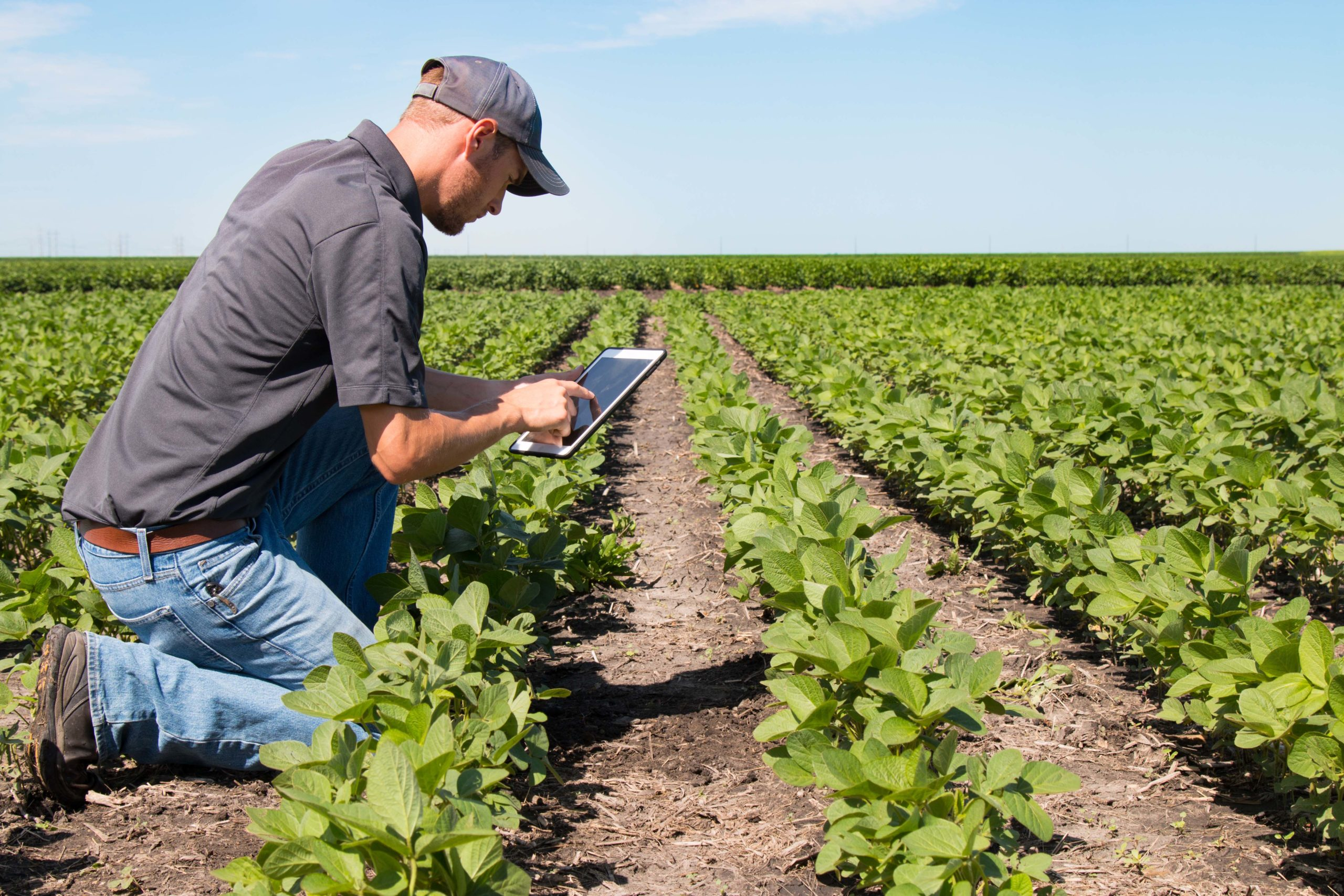 Evidence-based agriculture