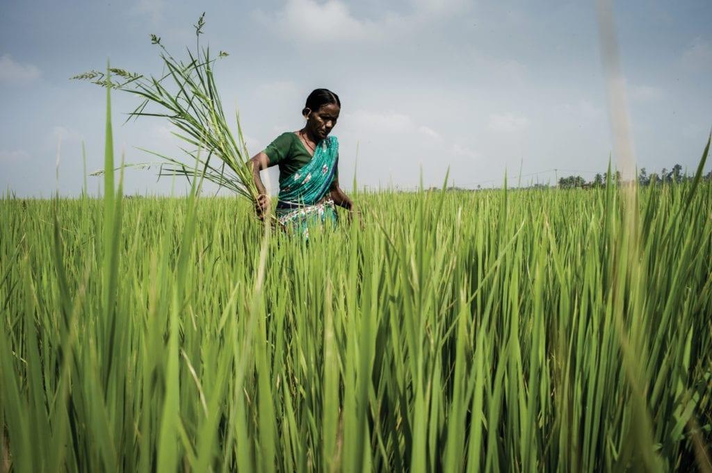 Lady in field of long grass