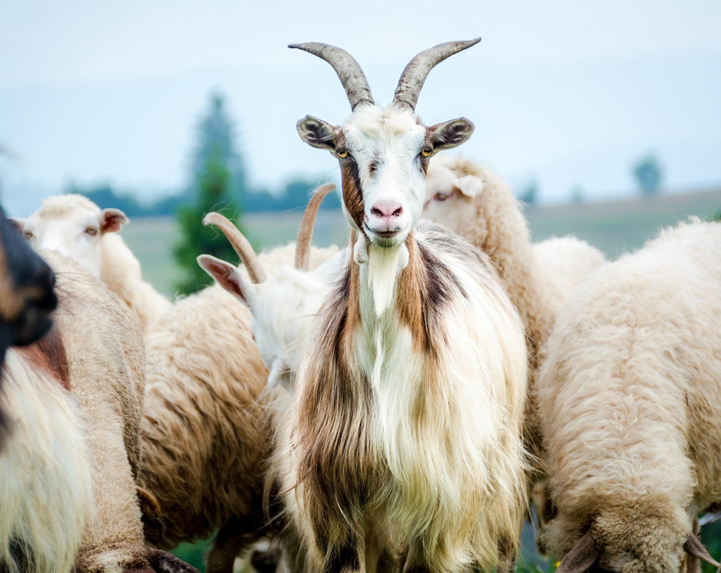 Livestock and animal science
