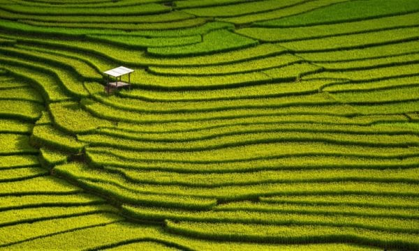 beautiful landscape view of rice terraces and hous