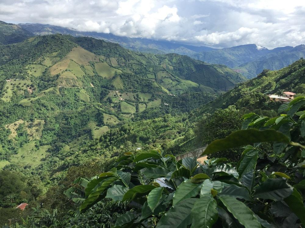 Colombian coffee landscape