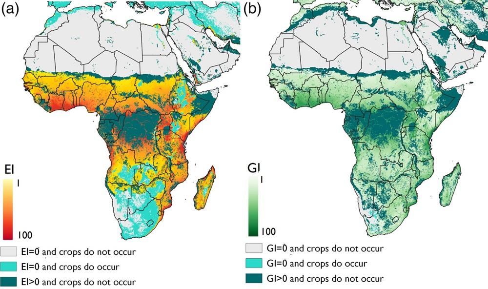 Modelled climate suitability of Africa for papaya mealybug
